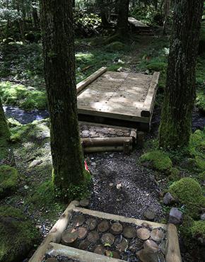 苔と湧水の南沢遊歩道コース
