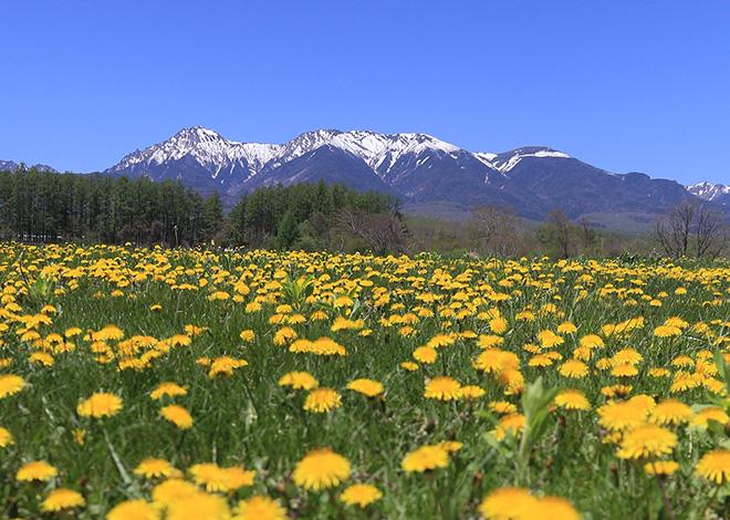 八ヶ岳と花
